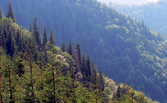 opțiuni de pădure strategice